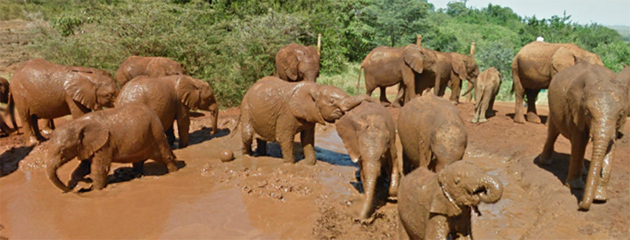 muthaiga travel David Sheldrick Elephant orphanage