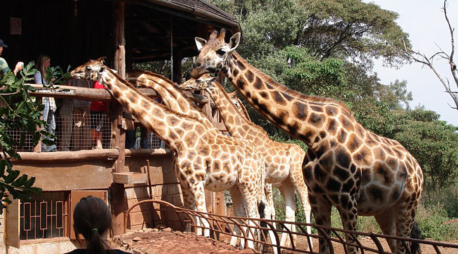 muthaiga travel Karen Blixen Museum Giraffe Center