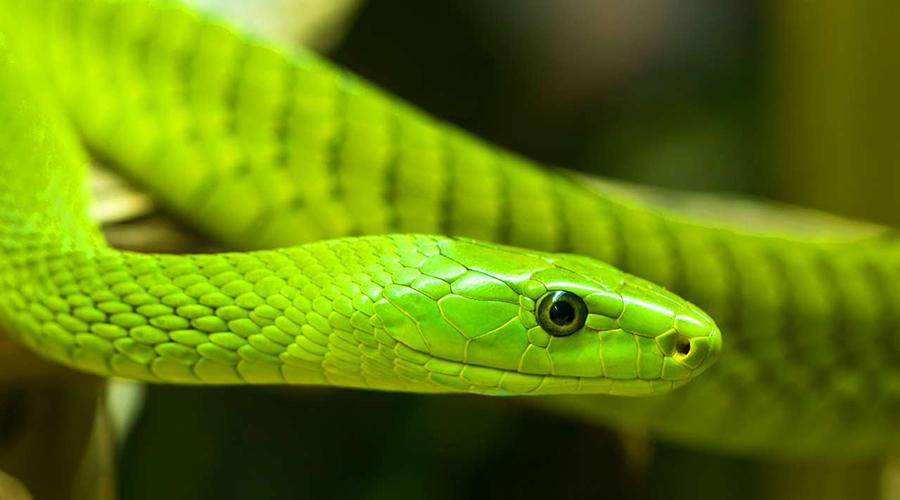 muthaiga travel nairobi snake park