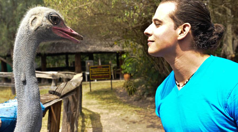 muthaiga travel ostrich park